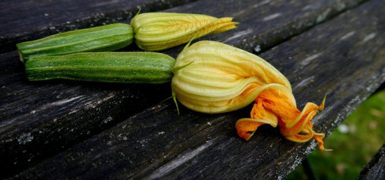 Beignet-fleur-de-courgette